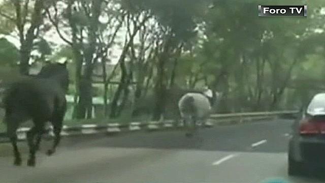 cnnee oraa mexico horses stampede_00001114.jpg