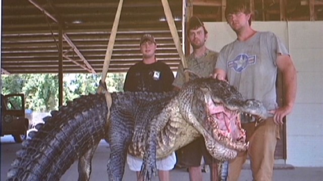pkg 727 lb gator caught mississippi_00000525.jpg