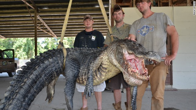 Hunters nab 13-foot, 727-lb alligator