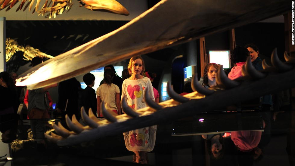 """Located across the street from Central Park in New York City, the American Museum of Natural History is featuring two temporary exhibits, """"Frogs: A Chorus of Colors"""" and """"Whales: Giants of the Deep"""" until January 2014. The museum's first supporters included Theodore Roosevelt and J.P. Morgan."""