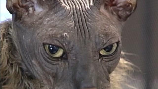 dnt ugly bat boy cat dies_00000000.jpg