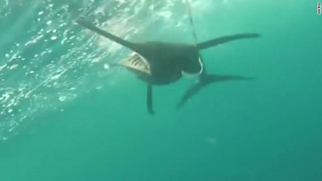 dnt pregnant woman capture 226 lb swordfish_00004324.jpg