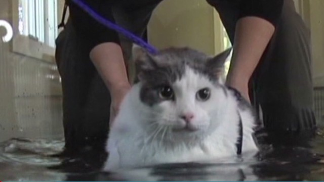 newday vo fat cat underwater treadmill_00003619.jpg
