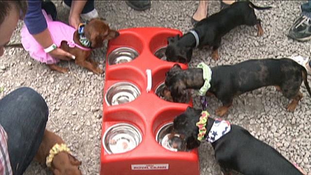 dnt canada weiner dog race_00011919.jpg