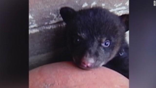 dnt man loses pet bear_00000327.jpg