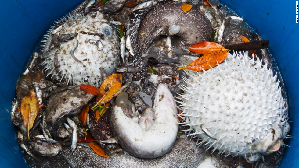 A variety of dead marine life collected by Pacific Environmental employees is seen inside the storage barrel.