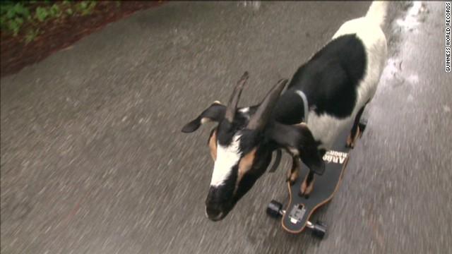 von goat sets skateboard record Guinness_00001326.jpg