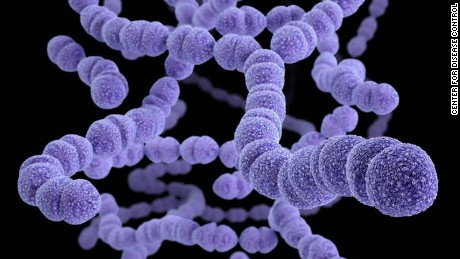 Most cases of bacterial pneumonia are caused by the streptococcus bacteria.