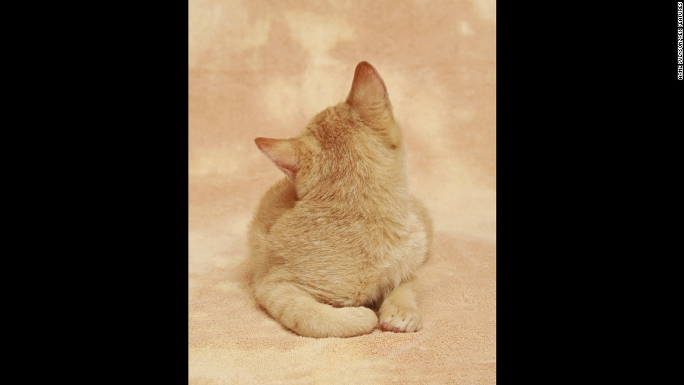 "Photographer <a href=""http://arnesvenson.com/main.html"" target=""_blank"">Arne Svenson</a> has put together a charming yet unusual calender-style gallery of kittens called ""Strays."""