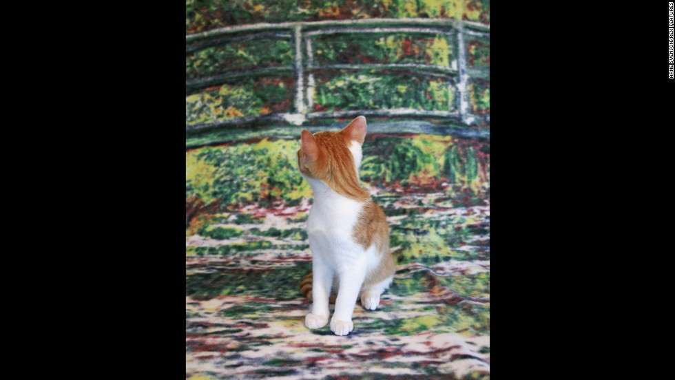 A white and orange tabby poses on a kitschy background.