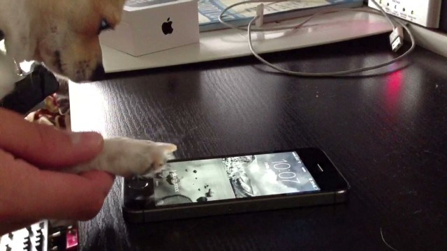 exp irpt iphone dog fingerprint_00000214.jpg