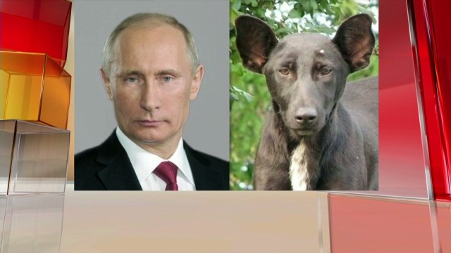Putin dog lookalike Award of the day Newday _00010203.jpg