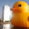 taiwan duck 5