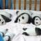 china baby pandas 2