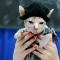 01 haute kitty 0928