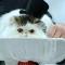 03 cat fashion 0928