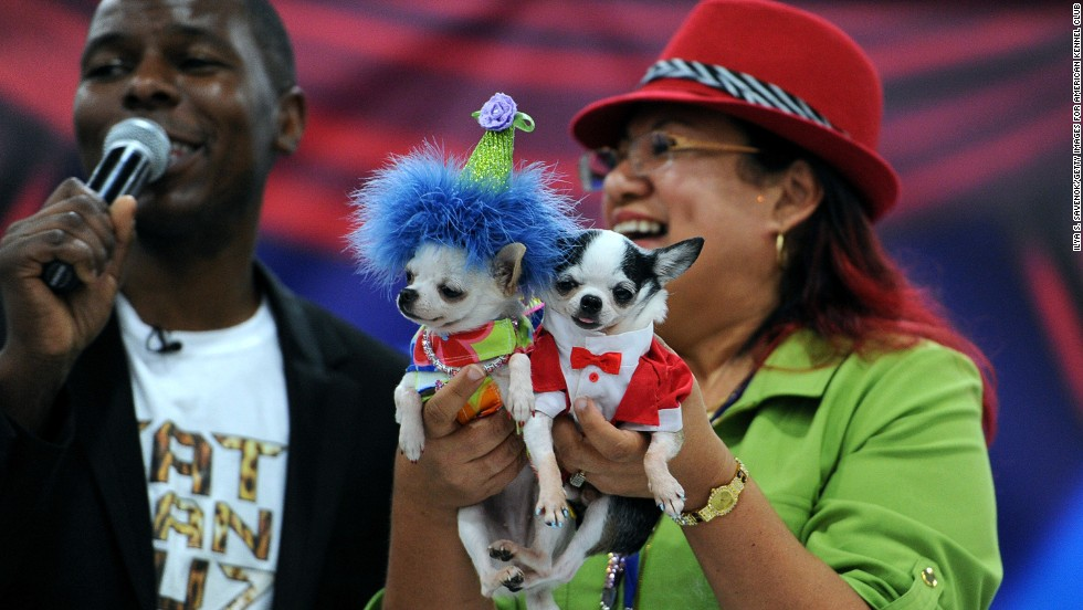"Pet fashion designer Ada Nieves holds her Chihuahuas ""Manhattan,"" wearing her best party outfit, and ""Mojito,"" wearing a white and red cotton tuxedo."