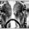 crowhurst horsehead