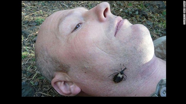 The Assassin Bug on the writer's face.