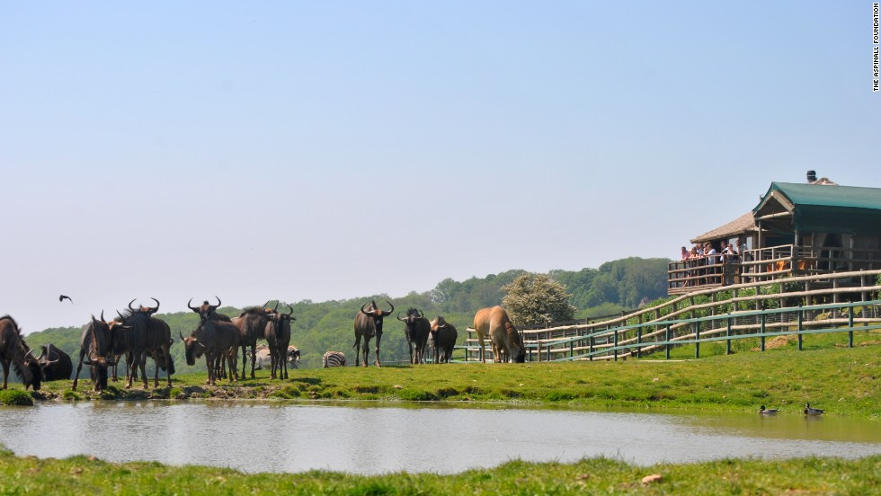 Livingstone Lodge at the Port Lympne Wild Animal Park has 10 safari-style tents, all of which overlook the watering hole used by the park's zebra, giraffe and rhino.
