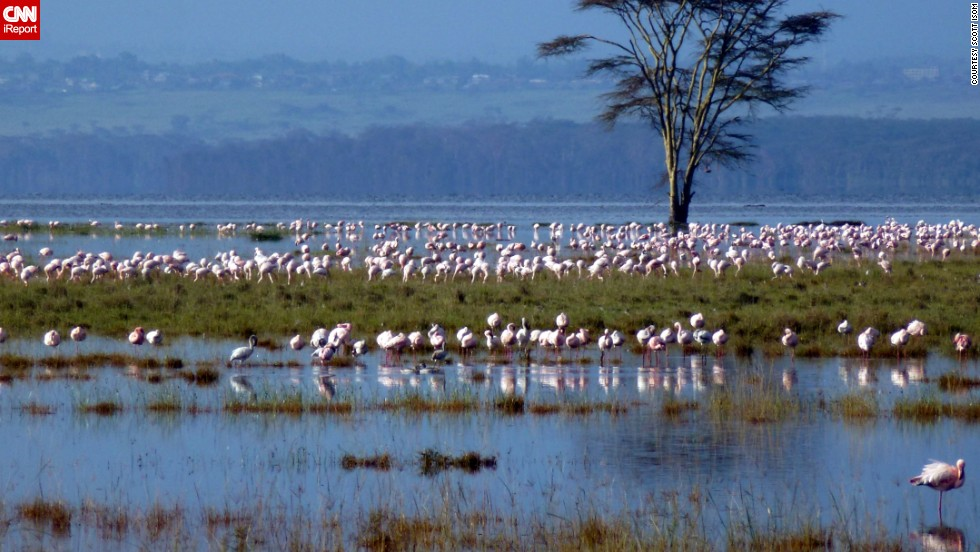 iReporter Scott Isom, a guide for Walking Adventures International, walks around the world, literally. During a recent walking tour in Kenya, he captured this moment at Lake Nakuru as a flock of flamingos fed there.