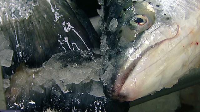 qmb smoked salmon producers pkg_00010117.jpg