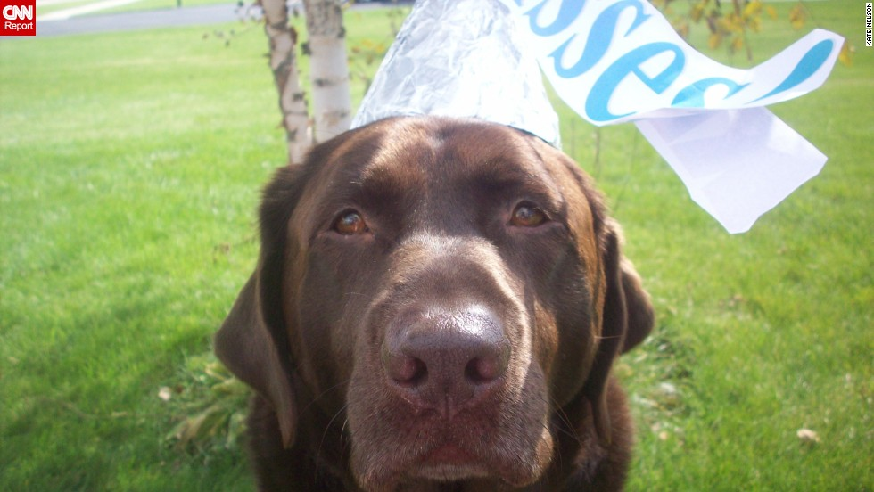 """A Hershey's Kiss was the <a href=""""http://ireport.cnn.com/docs/DOC-344142"""">obvious costume choice</a> for Bailey, iReporter Kate Nelson's sweet chocolate Lab."""