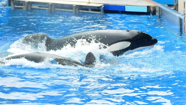 Filmmaker: Captivity bad for whales