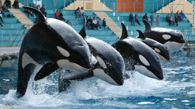 Photos: Killer whales in captivity
