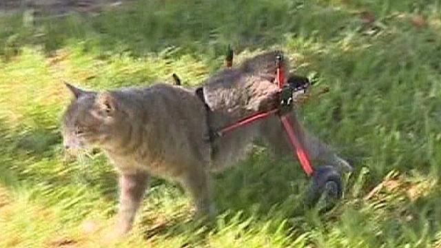 owner of handicap cat gets fined_00000808.jpg