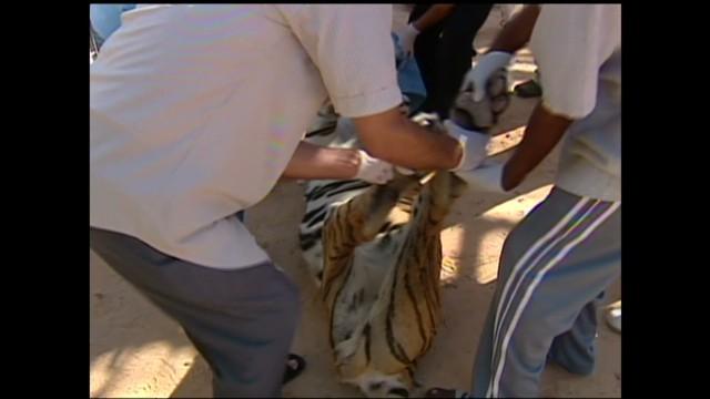 exp Tripoli zoo amidst revolution _00002001.jpg