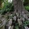 London great cemeteries St Pancras hardy
