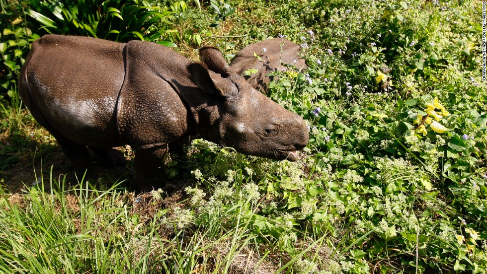 "<strong>Drone ranger: </strong>efforts to protect four of the world's last remaining northern white rhinos have been boosted by a $70,000 drone. The Ol Pejeta Conservacy in Kenya is planning to use the UAV to <a href=""http://edition.cnn.com/2013/01/30/world/africa/drone-poaching-ol-pejeta/index.html"">monitor the location of its wildlife and deter poachers from harming the animals</a> -- and other conservationists are <a href=""http://www.theguardian.com/environment/2013/may/28/drones-changing-face-conservation"" target=""_blank"">following suit</a>."