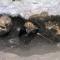 02 ancient skull 1017