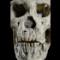 05 acient skulls 1017
