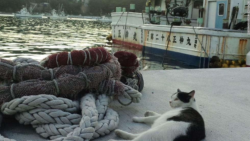 "This puss knows which side its sardine is battered on. Local fishermen provide feline offerings on Japan's ""Cat Island."""
