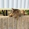 travel cats ainoshima 1