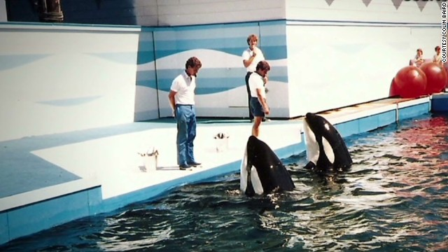 Troubled orca's early history