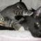 01 subway kittens