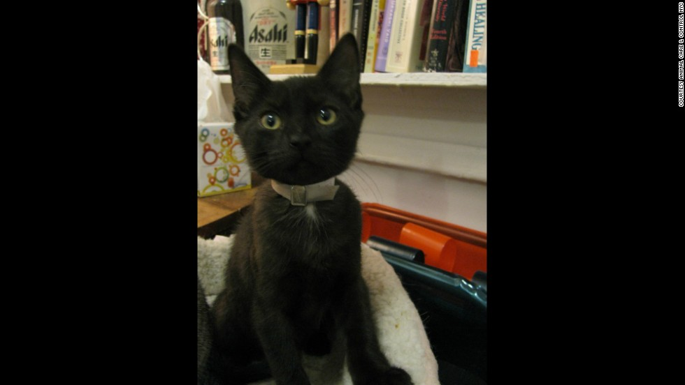 August shows off his collar at the animal foster home.