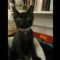 03 subway kittens