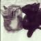 05 subway kittens