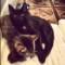07 subway kittens