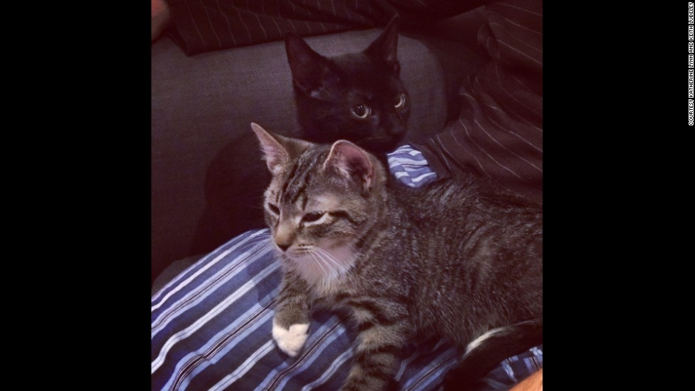 The Lubeleys say the kittens are adapting to their new home pretty quickly.