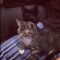 08 subway kittens