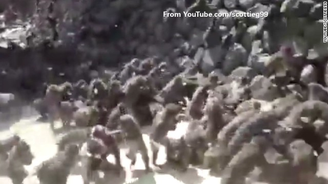 Obamacare hearing dubbed 'monkey court'
