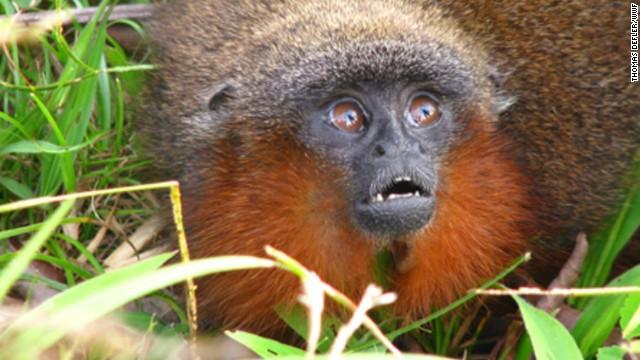 Photos: New Amazon species