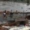 06 india flood 1026