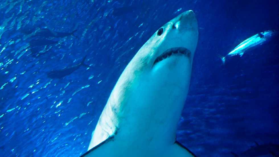 But our perceptions can change. Sharks, once seen as man-eaters, are more likely to attract the attention of conservationists who argue that humans pose a greater risk to these creatures than they do to us. People kill almost 100 million sharks each year, according to a 2013 study in the Marine Policy journal. In comparison, 118 shark attacks occurred in the whole world  in 2012 -- 80 of which were unprovoked.