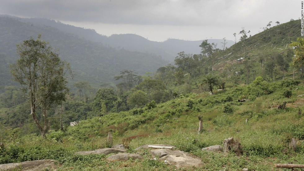 Felled trees lie on the mountainside just outside Freetown. African countries account for 14 of the 20 most at-risk nations.